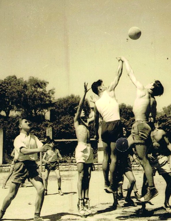 Sport aux eucalyptus: Basket.